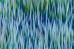 Portfolio - Landscape & Nature