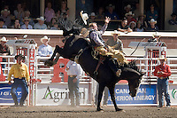 Calgary, Alberta, Canada, July 2008.  A cowboy rides his unbroke horse until he either falls of or passes the required time. Many professional cowboys who compete in the rodeo circuit, try their luck in the Calgary Stampede. Photo by Frits Meyst/Adventure4ever.com