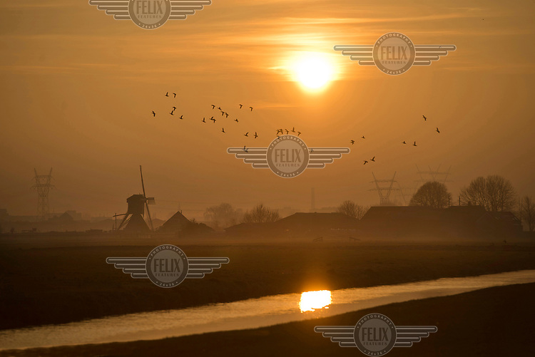 Birds flying above a landscape of windmills and canals.