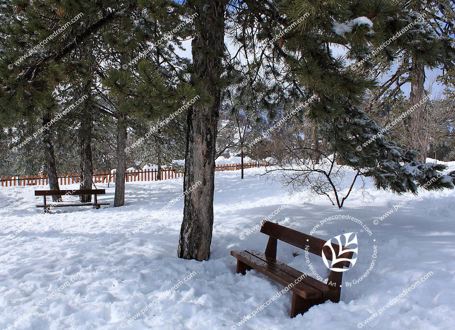 Wooden bench beneath a tree half-buried in snow at Troodos mountains,Cyprus.