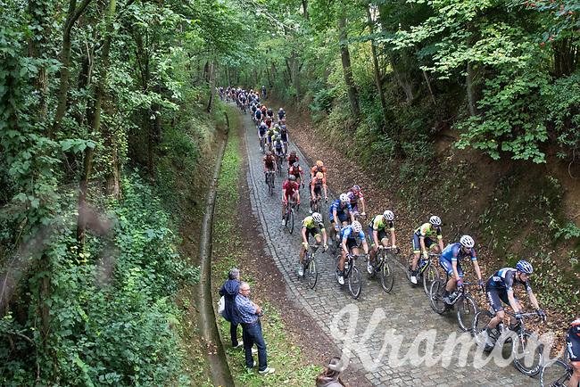 peloton on 1 of the cobbled sections<br /> <br /> Dwars door het Hageland (1.1)<br /> 1 Day Race: Aarschot &gt; Diest (194km)