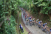 peloton on 1 of the cobbled sections<br /> <br /> Dwars door het Hageland (1.1)<br /> 1 Day Race: Aarschot &gt; Diest (194km)