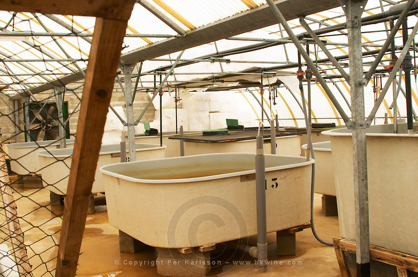 "A fish farm nursery tank for breeding sturgeon  ""Caviar et Prestige"" Saint Sulpice et Cameyrac  Entre-deux-Mers  Bordeaux Gironde Aquitaine France - at Caviar et Prestige"