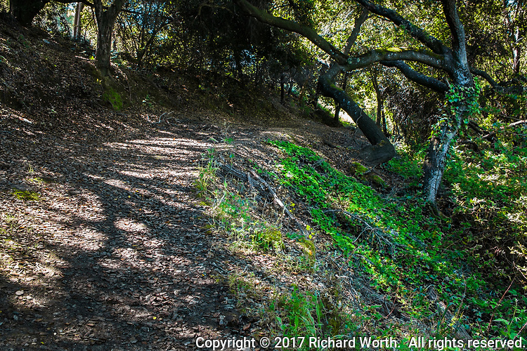 A dirt path, coated with months old leaves, winds around and under tangled trunks and branches at Cull Canyon Regional Recreation Area in the San Francisco Bay area.
