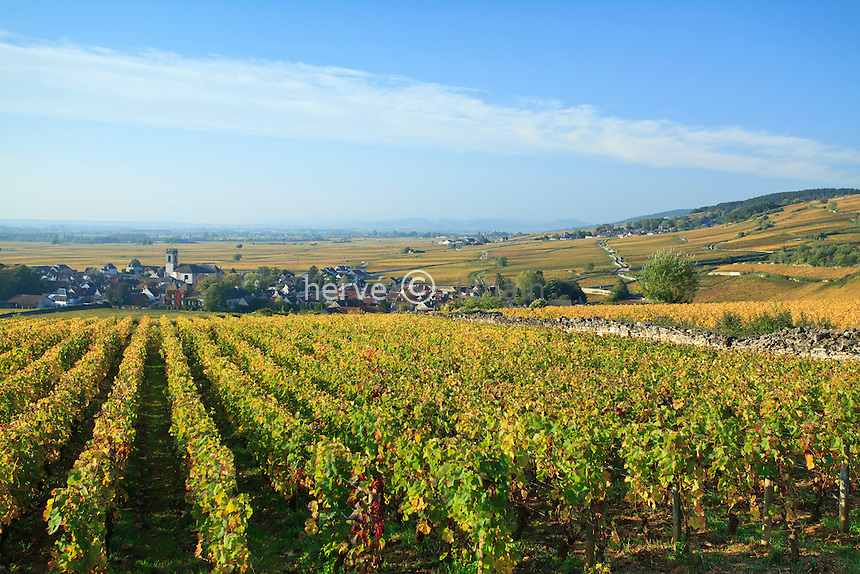 France, Côte d'Or (21), Route des Grands Crus, Pommard, vignoble Côte de Beaune, vignes et village en automne // France, Cote d'Or, Route des Grands Crus, Pommard, Cote de Beaune vineyard, vines and village in autumn