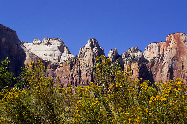 Towers of the Virgin and yellow flowers in Zion National Park, Utah, USA