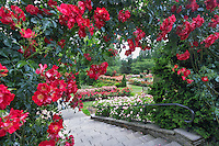 Rose archway. Portland, Oregon Rose Test Garden.