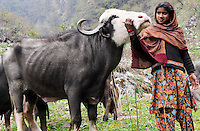 Van Gujjars love their buffaloes and think of them like members of the family.