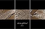 Triptych of desert earth.
