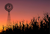 Corn field with windmill at sunset. Strasburg Pennsylvania USA Lancaster County.
