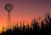 Corn field with windmill at sunset. Strasburg Pennsylvania USA Lancaster County.
