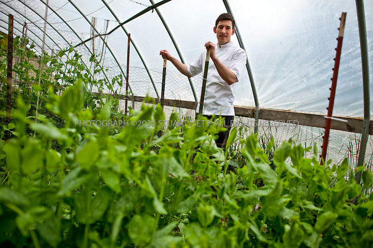 """5/14/2011--Lummi Island, WA, USA...Chef Blaine Wetzel of the Willow Inn at the farm near the restaurant that supplies it with fresh food. Four famers help on the farm...Willows Inn, on the tiny San Juan island of Lummi, is about two hours from Seattle by car and ferry. Yet it is about to become a destination restaurant, thanks to its new chef, Blaine Wetzel. The 24-year-old, formerly the protégé of Rene Redzepi at Noma, the Copenhagen restaurant that was ranked the """"best restaurant in the world"""" for 2010 by S. Pellegrino, took over the kitchen at Willows last year. The restaurant itself reopens in February; expect a menu with an obsessive focus on local ingredients, in the style of Noma. Since he was hired, Mr. Wetzel has been working with a farmer and an urchin diver who work solely for him. (SOURCE: NYT)...©2011 Stuart Isett. All rights reserved."""