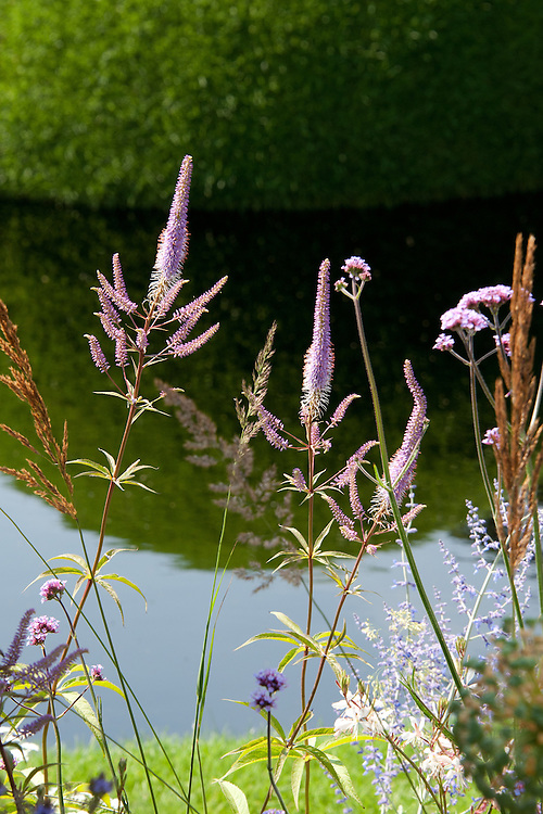 Verbena bonariensis, Veronicastrum virginicum 'Fascination', Calamagrostis × acutiflora 'Karl Foerster'. The World Vision Garden, Hampton Court Flower Show 2011.