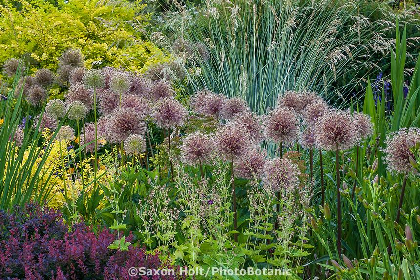 Waterwise mixed border demonstration garden at Bellevue Botanical Garden, Washington