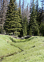 Scenery at Blewett Pass, in the Wenatchee Mountains featuring a winding meadow creek and trees. Stock photography by Olympic Photo Group
