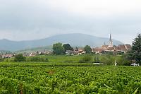 vineyards mittelbergheim alsace france