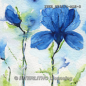 Isabella, FLOWERS, BLUMEN, FLORES, paintings+++++,ITKE026474-ALE-S,#f# ,everyday