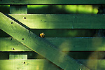Chipmunk in a spot of sunlight on a green fence