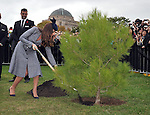 AUSTRALIA, Canberra : Britains Catherine, Duchess of Cambridge plants an Aleppo Pine seedling derived from seeds gathered after the battle of Lone Pine at Gallipoli, Canberra on April 25, 2014. Britain's Prince William, his wife Kate and their son Prince George were on a three-week tour of New Zealand and Australia. AFP PHOTO / Mark GRAHAM