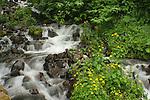 Lower creek section of Wahkeena Falls