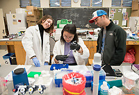 Betty Du '18 works on her pipetting technique as John McCormack and Margaret Schedl '18 watch in the Moore Lab. Undergraduate researchers are working with small quantities of bird DNA. March 21, 2018.<br />
