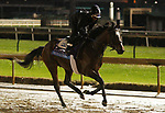 November 01, 2018 : Signalman in preparation for the Breeders' Cup on November 01, 2018 in Louisville, KY.  Candice Chavez/ESW/CSM