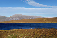 Highlands, west coast, deers and a loch from Scourie  to Durness<br /> Scotland May 8th - 19th. Trip across Scotland<br /> Foto Samantha Zucchi Insidefoto