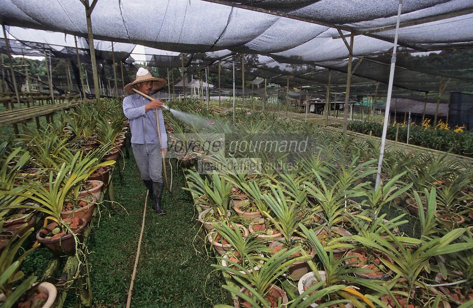 Asie/Singapour/Env. de Singapour: Ferme de culture d'orchidées