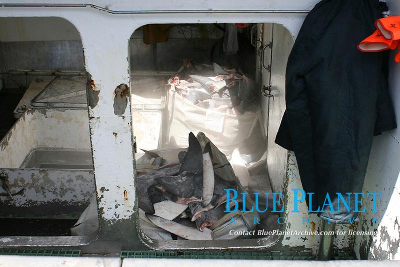 Spanish shark fishing vessel unloading blue shark fins; Horta; Faial; Azores; Portugal Europe; Northern Atlantic; Blue Shark; Prionace glauca, Mako shark, Isurus oxyrinchus,