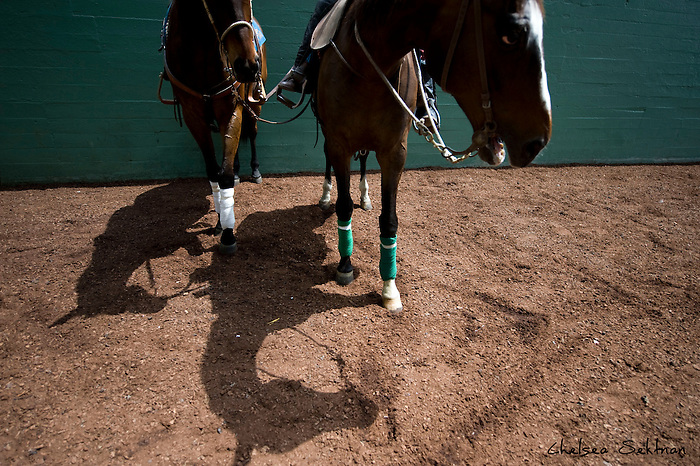 Track ponies wait for the thoroughbreds to come down to the track at the Santa Anita Racetrack on Saturday, April 11, 2009.