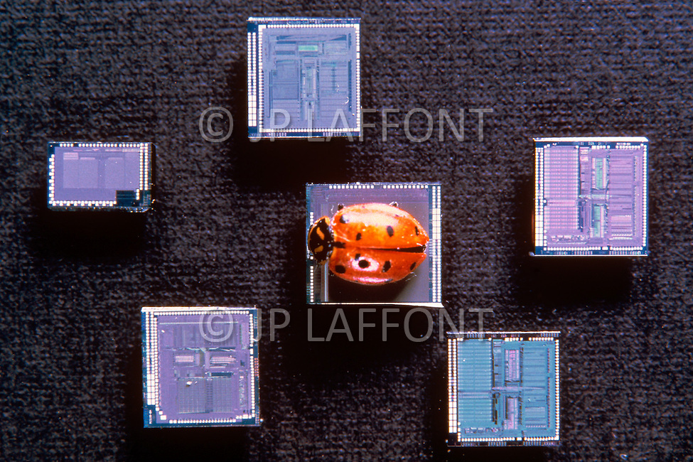 Silicon Valley, California - February 1983. Microchips, or miniature integrated circuits, equip all of the computers. Silicon Valley is the largest high-tech manufacturing center in the United States, and is the region most famous for innovations in software and Internet services.