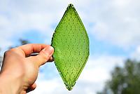 Silk Leaf, Artificial leaf capable of photosynthesis, Julian Melchiorri (MA Innovation Design Engineering, 2014)