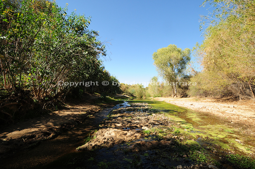 """The Hassayampa River Preserve is located near Wickenburg, Arizona, sixty miles northwest of Phoenix.  The Hassayampa River, where the preserve takes its name from, flows underground for most of its 100-mile course through the Arizona desert, emerging in the preserve area, mostly during the rainy season.  The Hassayampa River Preserve was purchased by The Nature Conservancy in 1986.  Bird watchers have reportedly spotted over 280 species of birds at this preserve.  The visitor's center has a list of recent bird sightings in the area.  The word Hassayampa is an old Indian word meaning """"the river that flows upside down.""""  Visitors can expect to see desert vegetation such as cottonwood/willow riparian forest, desert fan palms, plus Sonoran Desert species such as saguaro, barrel and cholla cactus, mesquite, paloverde, and spring wildflowers.  Photographs by Eduardo Barraza © 2013"""