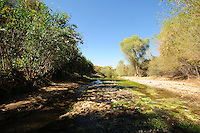 "The Hassayampa River Preserve is located near Wickenburg, Arizona, sixty miles northwest of Phoenix.  The Hassayampa River, where the preserve takes its name from, flows underground for most of its 100-mile course through the Arizona desert, emerging in the preserve area, mostly during the rainy season.  The Hassayampa River Preserve was purchased by The Nature Conservancy in 1986.  Bird watchers have reportedly spotted over 280 species of birds at this preserve.  The visitor's center has a list of recent bird sightings in the area.  The word Hassayampa is an old Indian word meaning ""the river that flows upside down.""  Visitors can expect to see desert vegetation such as cottonwood/willow riparian forest, desert fan palms, plus Sonoran Desert species such as saguaro, barrel and cholla cactus, mesquite, paloverde, and spring wildflowers.  Photographs by Eduardo Barraza © 2013"