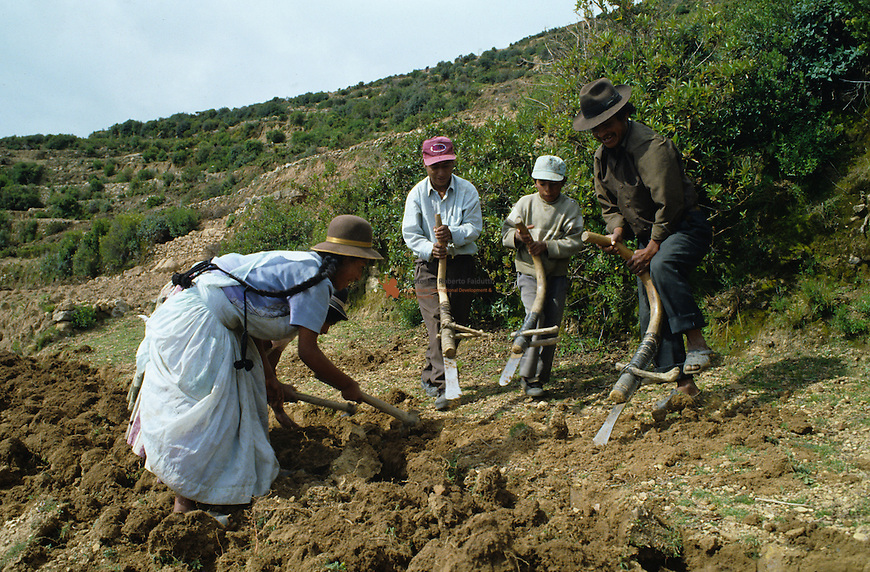 Farmer family preparing soil for plantation with hoes similar to the ones used in old times by Incas