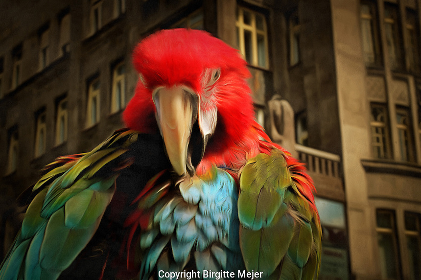 Scarlet Macaw Parrot with old architecture as backdrop. Photography, digitally altered.