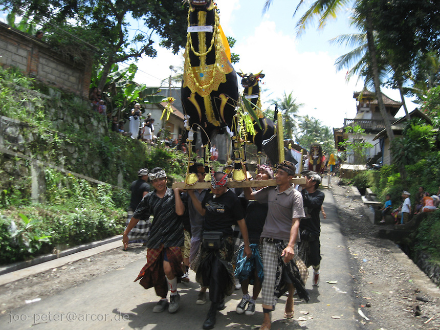 a black bull is carried to cremation place, village Laplapan, Bali, archipelago Indonesia