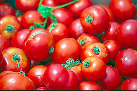 Red Ripe Tomatoes, beautiful glow