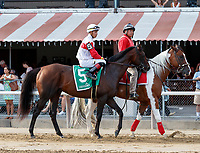 Inspector Lynley  in the post parade as Qurbaan (no. 6) wins the Bernard Baruch Handicap (Grade 2), Sep. 3, 2018 at the Saratoga Race Course, Saratoga Springs, NY.  Ridden by Irad Ortiz, Jr., and trained by Kiaran McLaughlin, Qurbaan finished  a nose in front of Forge (no. 3) and Projected (no. 2) in a three horse photo finish.  (Bruce Dudek/Eclipse Sportswire)
