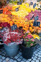 Bright colours at a Paris flower shop, France.