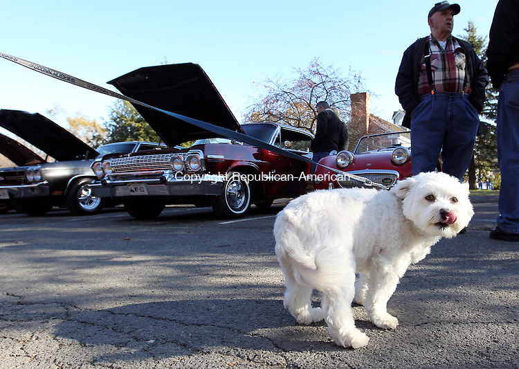 Southbury, CT-02 November 2011-110611CM06-  Abby, a 6 year old canine licks her lips while attending a car show outside Jordan's restaurant in Southbury Sunday afternoon.  Abby was with her owners, Karen and Michael Urban of Southbury who were showing off their 1969 Chevelle Convertible. The Southbury Food Bank hosted the fundraiser, with proceeds going towards Thanksgiving dinner baskets for local families.  The baskets include, a turkey, trimmings and a choice of apple of pumpkin pie.  Anyone can donate to the food bank at local stores, which contain blue bins that are picked up weekly by volunteers said, Ann Marie Galus, Vice President of the Southbury Food Bank.        Christopher Massa Republican-American