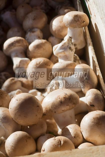Europe/France/Pays de la Loire/49/Maine-et-Loire/ Angers: Champignons de couche sur un étal du marché