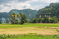 Rice paddy fields and cliffs in the Harau Valley, Bukittinggi, West Sumatra, Indonesia