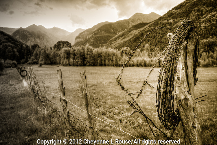 Barbed Beauty - Telluride, Colorado