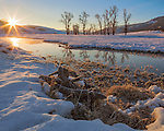 Yellowstone National Park, WY: Cottonwood trees on the Lamar River reflecting in an open river channel with morning sun
