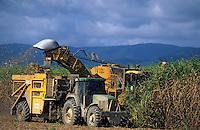 Océanie/Australie/Queensland/Env. de Cairns: Récolte de la canne à sucre