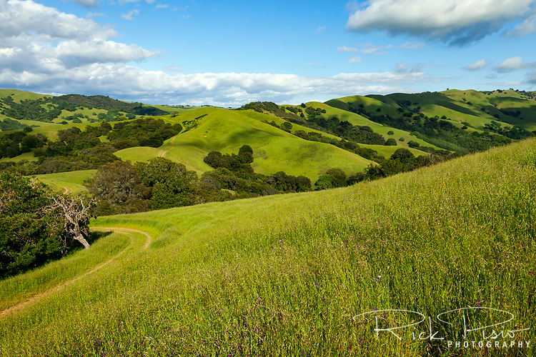 Hillsides and hiking trails in Morgan Territory Regional Preserve, an East Bay Regional Park located in California's Contra Costa County.