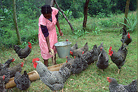 Woman farmer feeding chicken