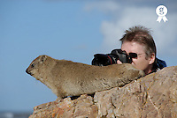 Man taking photograph of Rock Hyrax (Procavia capensis), close-up (Licence this image exclusively with Getty: http://www.gettyimages.com/detail/200482556-001 )