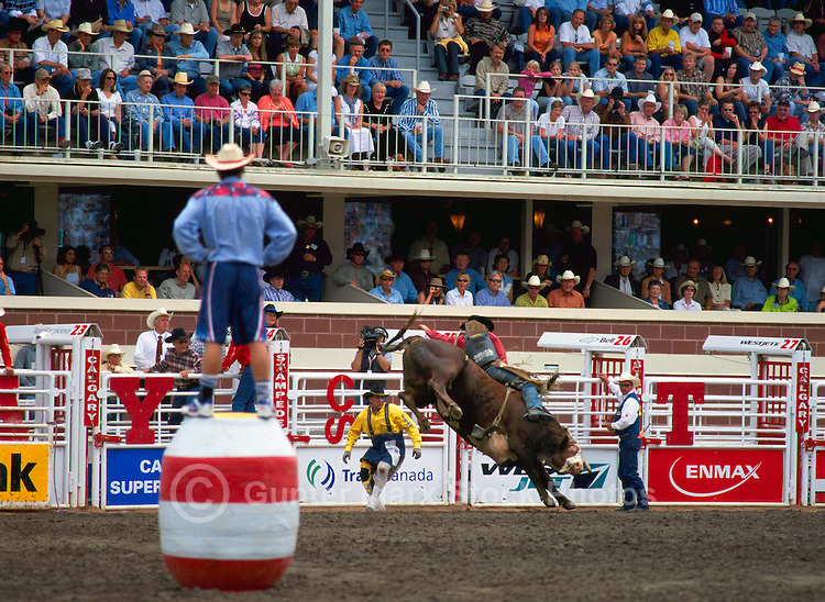 Rodeo Clown watching Cowboy riding Bucking Bull at Calgary Stampede, Calgary, Alberta, Canada - Editorial Use Only